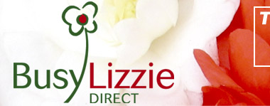 Busy Lizzie Direct