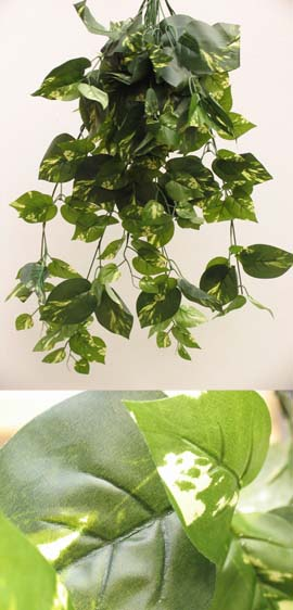 3x+Artificial+Silk+Large+Ivy+Trailing+Plants+%28Dark+Leaf+with+a+Light+Cream+Variegation+Heart+Shaped%29+70CM+Length+%26+with+170%2B+Large+Ivy+Leaves