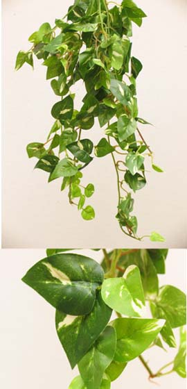 3+X+Artificial+Silk+Small+Leaf+Ivy+Trailing+Plants+%28Dark+Leaf+with+a+Light+Cream+Variegation+Heart+Shaped%29+40+CM+Length+%26+with+130%2B+Assorted++Sized+Ivy+Leaves