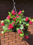 Artificial Trailing Geranium Hanging Basket in Hot Pink