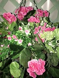 Artificial Trailing Geranium Hanging Basket in Hot Pink X 2