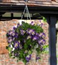Artificilal Hanging Basket surfinia lilac and White