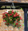 Artificial Hanging Basket Surfinia Pink White