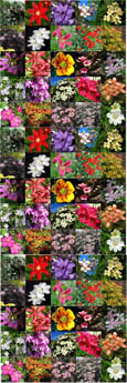 3 PLANT PROMOTION- Choose your own 3 Established Climbing Plants - Pick 'n' Mix