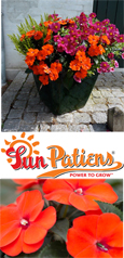 SunPatiens® Compact Orange X 5 Jumbo Plug Plants. DELIVERY - MAY ONWARDS
